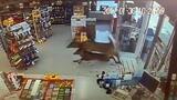 Three Deer Run Wild in a Convenience Store, Ransack It