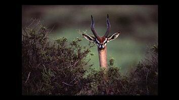 Shooting Wildlife