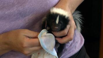 Bandit Patrol: Skunk Talk