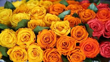 Do You Know Where Your Roses Come From?
