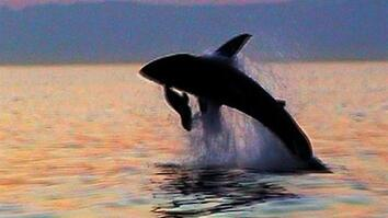 World's Deadliest: Great White Shark vs. Seals