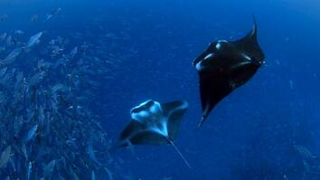 In Gorgeous Palau, Explorers Find Wonders Worth Protecting