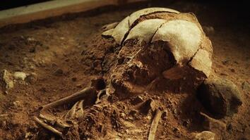 8,400-Year-Old Skeleton of a Baby Found in Germany