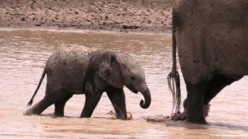 96 Seconds of Baby Elephants