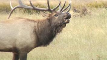 Listen: These Elk Sound Terrifying, Like Ringwraiths
