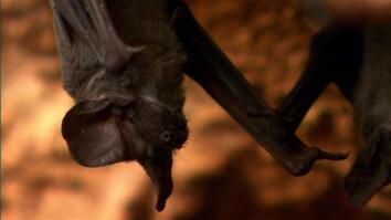Bats Swarm to Survive