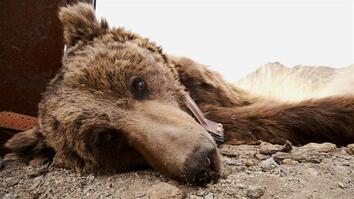 Saving the World's Rarest Bear