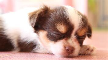 Puppies: Little-Known Facts About Man's Best Friend