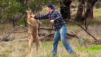 Man Punches Kangaroo