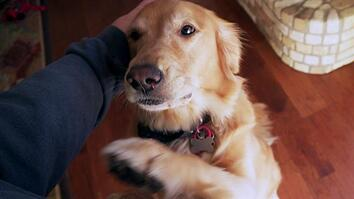 Will Your Dog Pick You Over a Stranger?