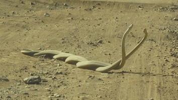 Watch World's Deadliest Snakes Battle Over a Female