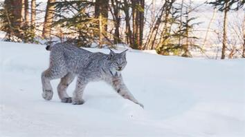 Snow DNA reveals new way to track animals in winter