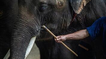 Inside the dark world of captive wildlife tourism