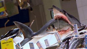 Shark Alert! Species Struggle