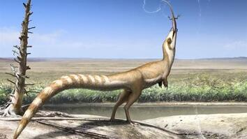 Dinosaur May Have Looked Like a Raccoon