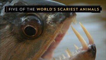 The World's Biggest Spider, Vampire Fish, and Other Real-Life Monsters