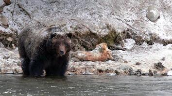 """""""It Really Wasn't the Bear's Fault"""": Grizzly Attack Survivor Reflects"""