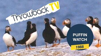 Throwback TV: Puffin Watch