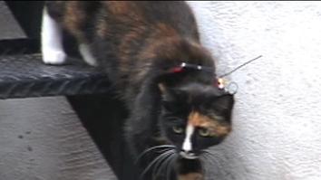 Crittercam POV: House Cat