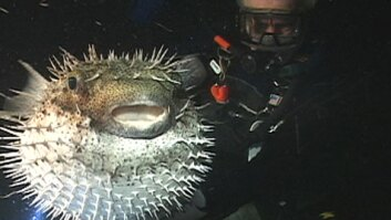 Underwater Night Life