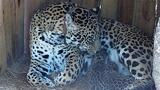 Jaguar Cubs Born in This Park for First Time in 100 Years