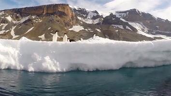 POV: Kayaking Among Penguins in Antarctica