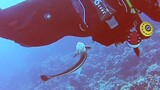 Confused Suckerfish Tries to Latch Onto Diver