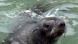 Seals the Deal