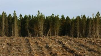 Here, Cutting Down Millions of Trees is Actually a Good Thing