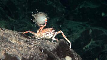 10 Weirdest Creatures in Chile's Newly Protected Seas