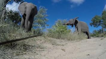 See What Happens When Wild Elephants Encounter a Roving Camera