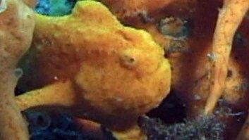 Underwater Survival Techniques