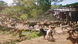 Watch Thousands of Dogs Run Free in This Magical Sanctuary