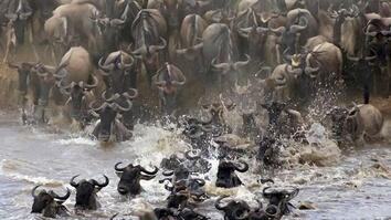 Watch Animals Battle for Survival in This Epic River Showdown