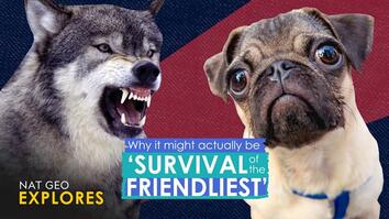 Why it actually might be 'survival of the friendliest'