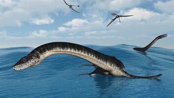 Plesiosaurs 101