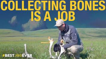 Collecting Animal Bones in Alaska