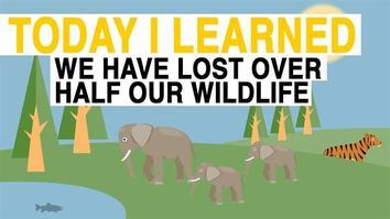 TIL: We Have Lost 50% of Wildlife Since 1970