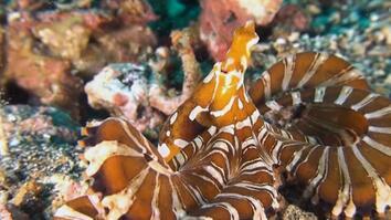 What Makes the Wonderpus Octopus So Wonderful?