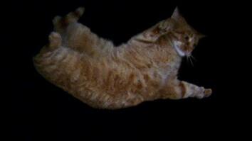 Acrobatic Cats