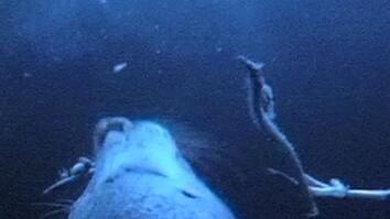 Crittercam POV: Harbor Seal Eats