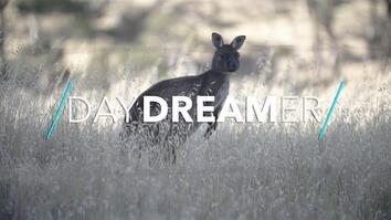 Welcome to the Wild World of Kangaroo Island