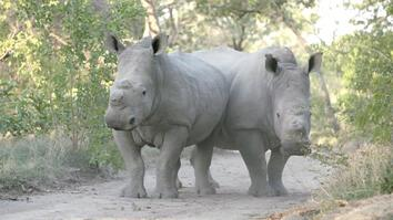 Meet Six Rescued Rhinos That Survived Poaching