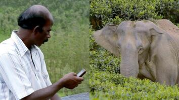Text Messaging Helps Elephants and People Coexist