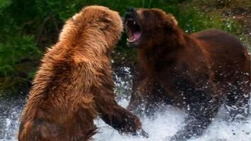 World's Deadliest: Grizzly Bear Attacks Prey