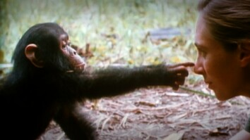 Jane Goodall: Hero and Visionary