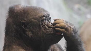 How Do Animals Pick Their Noses?