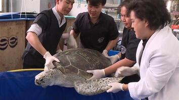 Turtle Dies After Eating 11 Pounds of Coins