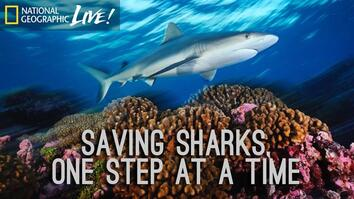 Saving Sharks, One Step at a Time