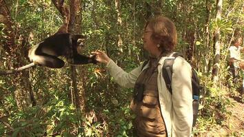 Endangered Lemurs Focus of Conservation Prize